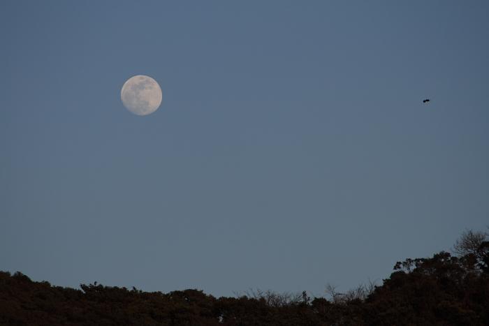 moon rider's rabbit.JPG